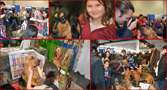 Example of activities at AKC Meet The Breeds.